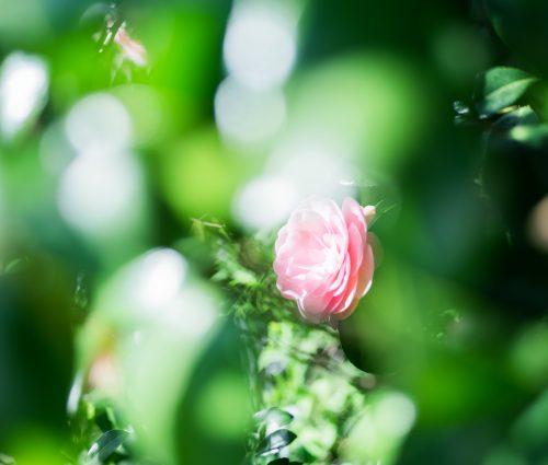 土田 貴文 作「Flower-8」プリント(単体)