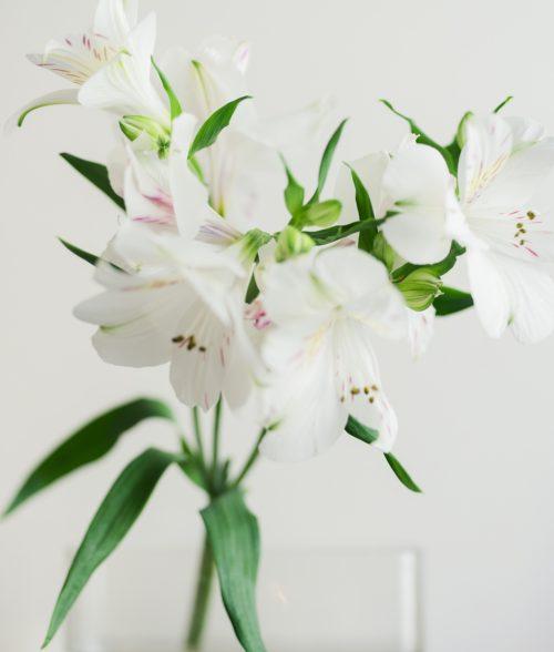 土田 貴文 作「Flower-10」プリント(単体)