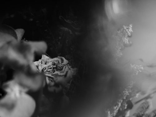 「Ice rose vol.1」プリント(単体)