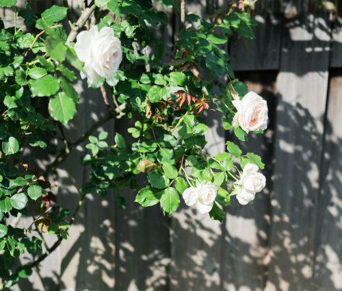土田 貴文 作「Flower-15」プリント(単体)
