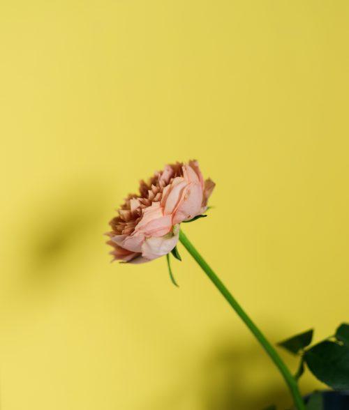 土田 貴文 作「Flower-20」プリント(単体)