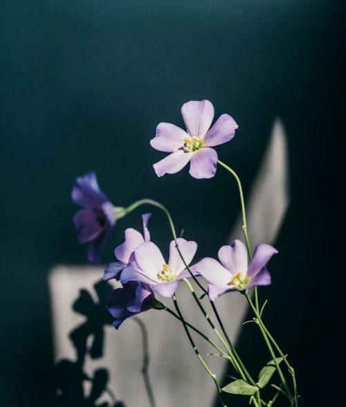 土田 貴文 作「Flower-6」プリント(単体)
