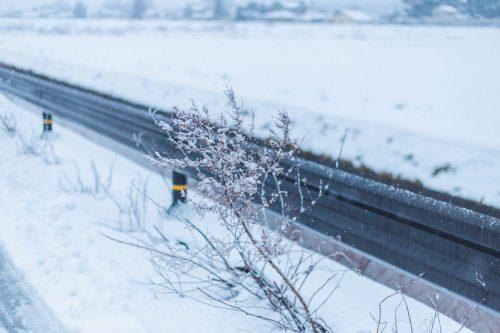川上 直 作「winter-3」プリント単体